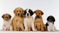 Коллекция фильмов Фильмы про собак онлайн на Кинопод