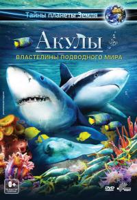 Смотреть Акулы 3D: Властелины подводного мира онлайн на Кинопод бесплатно