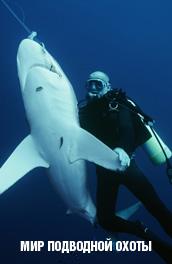 Смотреть Мир подводной охоты онлайн на Кинопод бесплатно