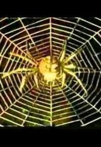 Смотреть Золотой паук онлайн на Кинопод бесплатно
