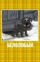 Смотреть фильм Белолобый онлайн на Кинопод бесплатно