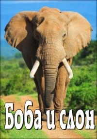 Смотреть Боба и слон онлайн на Кинопод бесплатно