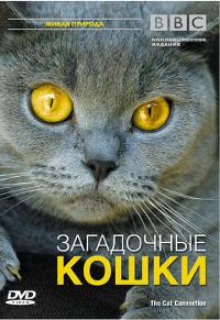 Смотреть BBC: Загадочные кошки онлайн на Кинопод бесплатно