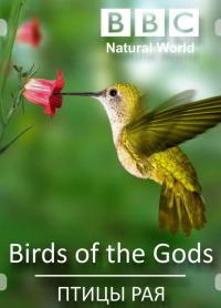 Смотреть Птицы рая онлайн на Кинопод бесплатно