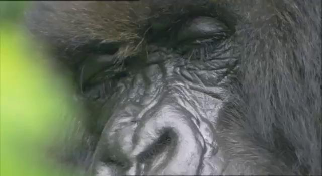 """Фильм онлайн  """"Африка"""" фото актеров"""