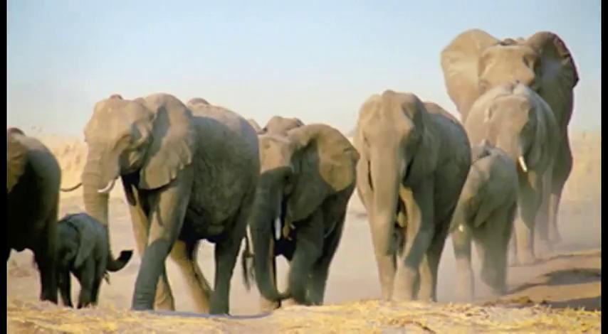 """Фильм онлайн  """"BBC: Величайшие явления природы"""" фото актеров"""