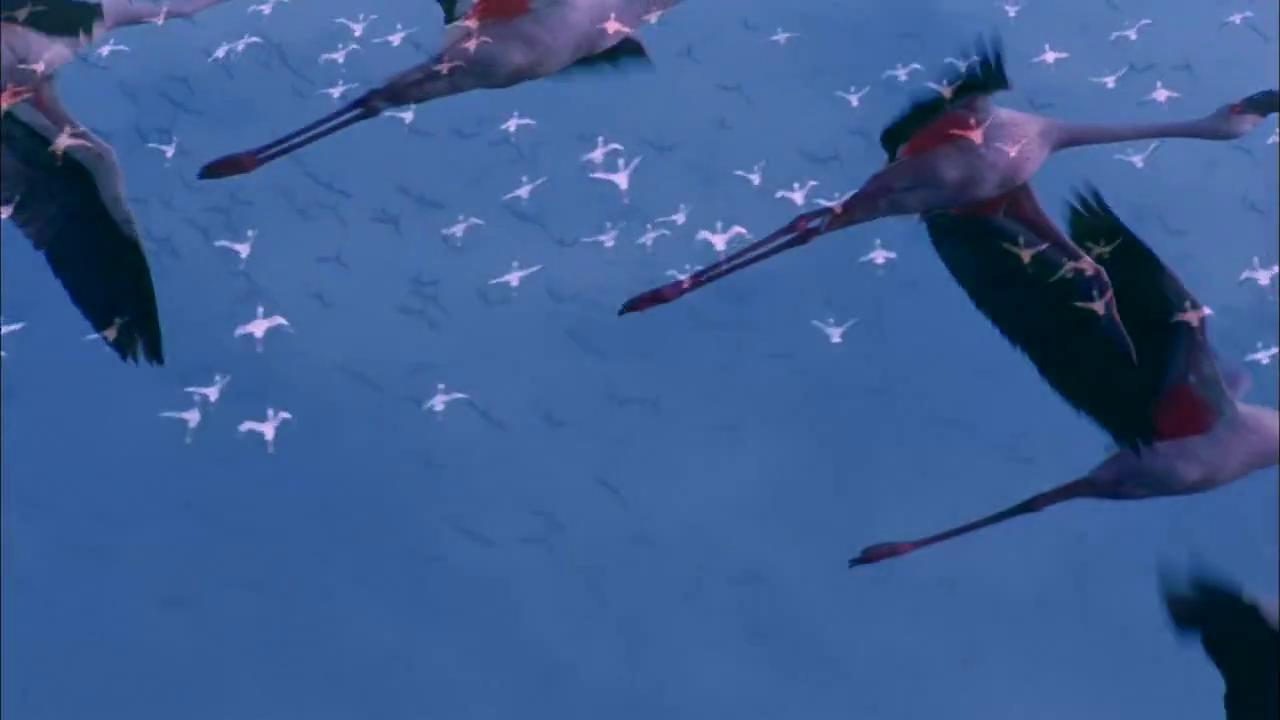 "Фильм онлайн  ""Пурпурные крылья: Тайна фламинго"" фото актеров"