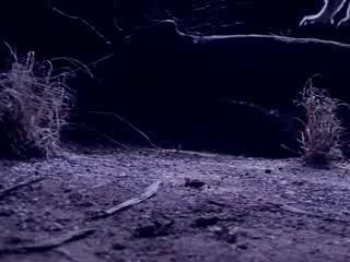 """Фильм онлайн  """"BBC: Эти загадочные животные"""" фото актеров"""