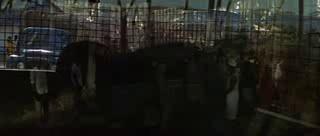 """Фильм онлайн  """"Рожденная свободной"""" фото актеров"""