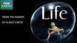 Сериал BBC: Жизнь / Life