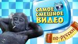 Сериал Самое смешное видео по-русски