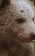 медведь Юк