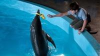 Коллекция фильмов Фильмы про дельфинов онлайн на Кинопод