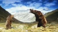 Коллекция фильмов Фильмы про медведей онлайн на Кинопод