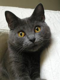 Смотреть Кошачий алфавит онлайн на Кинопод бесплатно