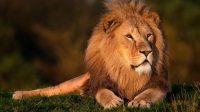 Коллекция фильмов Фильмы про львов онлайн на Кинопод