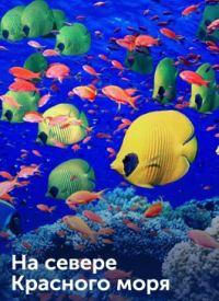 Смотреть На севере Красного моря онлайн на Кинопод бесплатно