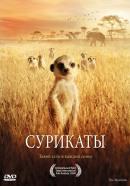 Смотреть фильм Сурикаты онлайн на KinoPod.ru платно