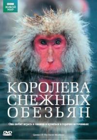 Смотреть Королева снежных обезьян онлайн на Кинопод бесплатно