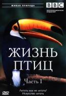 Смотреть фильм BBC: Жизнь птиц онлайн на Кинопод бесплатно