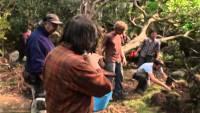 Смотреть обзор Обзор фильма - Хоббит: Нежданное путешествие онлайн на Кинопод