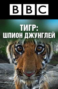 Смотреть BBC: Тигр – Шпион джунглей онлайн на Кинопод бесплатно